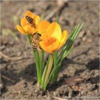 Весна :: Виктор Марченко