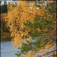 Золотая осень :: Виктор Бондаренко