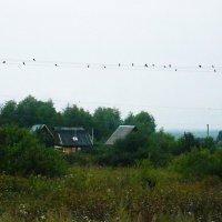 Птицы в стаи собираются :: Владимир Ростовский