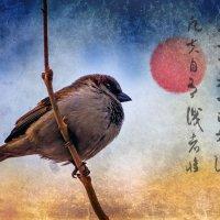 Исполненный важности птиц. :: Хась Сибирский