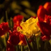 цветы :: Николай Прийменко-Эйсымонт