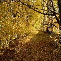 Осень :: Милешкин Владимир Алексеевич