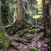 Заповедный лес :: Alexander Varykhanov