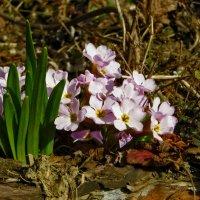 Весна :: Наталья (D.Nat@lia) Джикидзе (Берёзина)