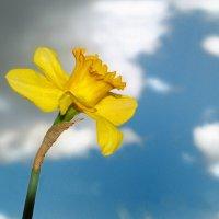 весна идёт! от неба до земли! :: Lena