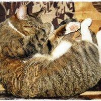 13 марта 2015 - Всемирный день сна :: muh5257