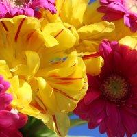 Красивый солнечный тёплый день :: Mariya laimite