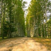 Дорога к Светлояру :: Александр Кореньков