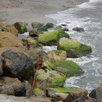 Морское разноцветье :: Василий