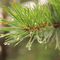 в лесу после дождя :: Jeny Gurina