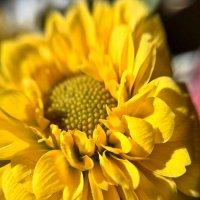 весеннее солнце :: Екатерина Яковлева