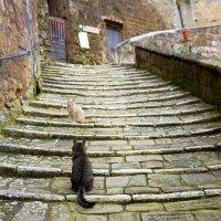 Cats :: Mariia Klimenko