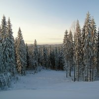 Зимний лес :: Олег Пученков
