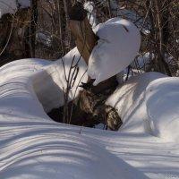 Природа и воображение 2 :: Алексей Масалов