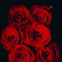розы :: Vitaliy Mytnik