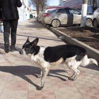 Жизнь собачья... :: Андрей Зайцев