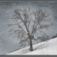Одинокое дерево на склоне - рисунок :: Татьяна Губина