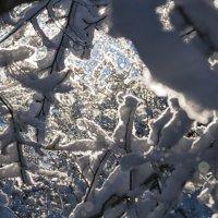 снег :: Сергей Леонтьев