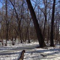 Img_3029 - Есть подозрение, что Весна :: Андрей Лукьянов