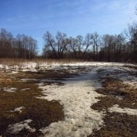 Img_3038 - Есть подозрение, что Весна. - Земля!!! :: Андрей Лукьянов