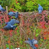 танец маленьких голубей :: Александр Корчемный