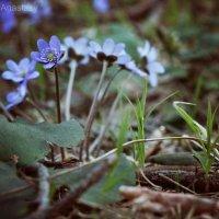лесные цветы :: Анастасия Краснова