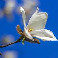 А небо в марте синее-синее! :: Александр Земляной