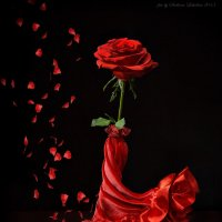 Роза в красном :: Светлана Л.