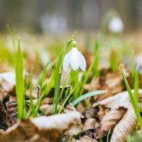 Весна :: Юлия Пандина