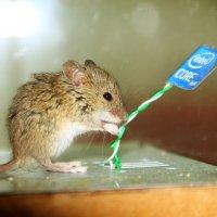 просто Мышь... :: Илья Антюфеев