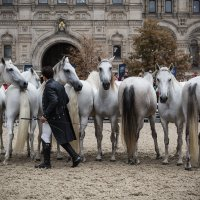 02 Конное шоу - Lorenzo Emotion horse show in Moscow :: Максим Максимов