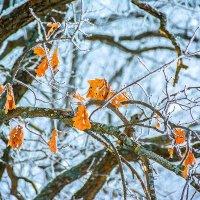 Зимние листочки. :: Александр Тулупов