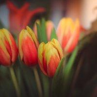 Тюльпаны :: Елена Хохлова