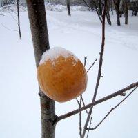 Зимнее яблочко принарядилось . :: Мила Бовкун