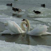 Они нашли друг друга... :: Юрий Поляков
