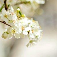 Весна пришла :: Елена Нор