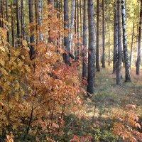 осень золотая... :: Надежда Шемякина