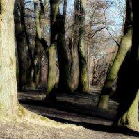 В старом парке весна..... :: Юрий Цыплятников