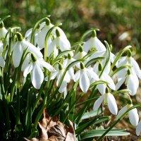 Картина весны :: Swetlana V