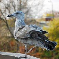 Городская птица :: Teresa Valaine