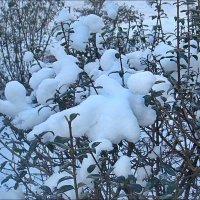 Зимние мгновения :: Нина Корешкова