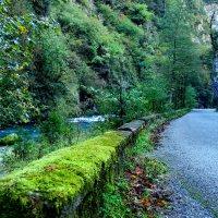 Горная дорога на Рицу :: Andrey Panoff