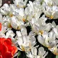 Весна :: Nikolay Monahov