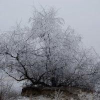 Встреча зимы с весной :: Ксения Довгопол