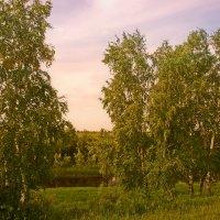Стоят березки у речушки... :: Иван Солонинка