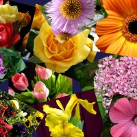 Цветочное настроение. :: Елена