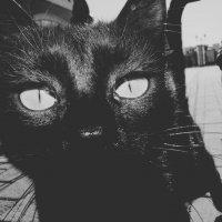 Черное и белое :: Dar Milekin