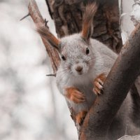 squirrel :: Дмитрий Красько