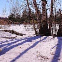 Рыхлый снег темнеет в марте :: Татьяна Ломтева