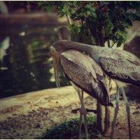 Как же преданно и нежно!!! Открытый зоопарк Као Кео.Паттайя.Таиланд. :: Александр Вивчарик
